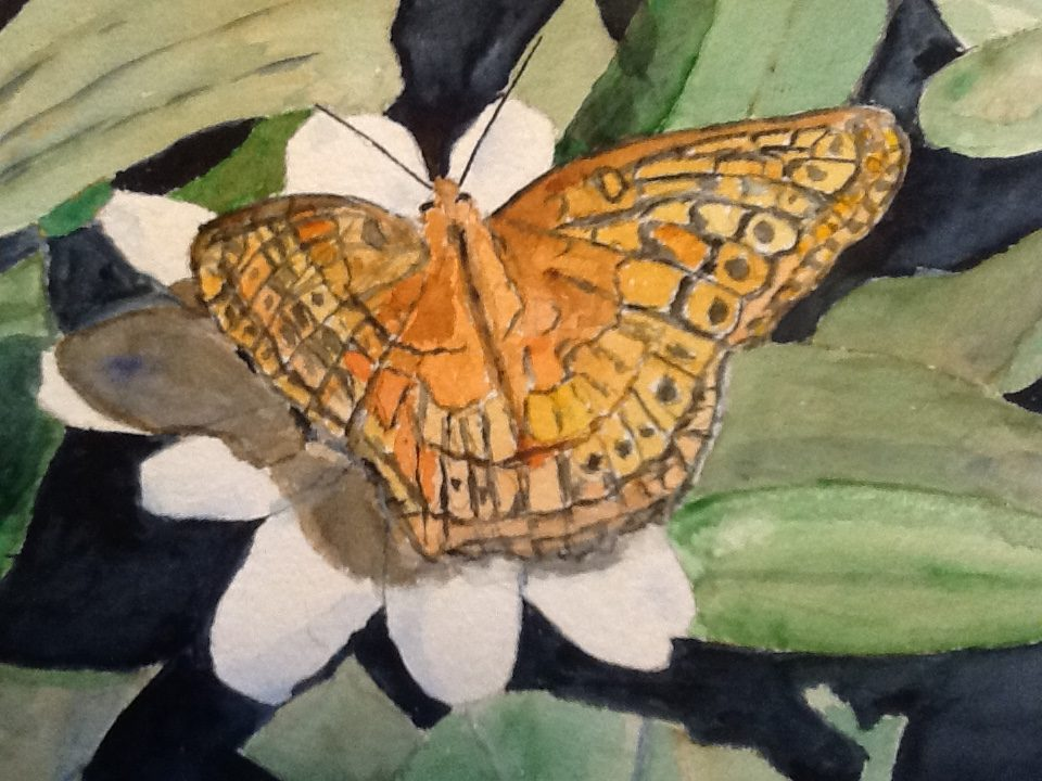Moth On White Flower Watercolors By Tony Weisberg